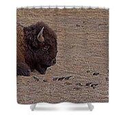 Buffalo And Birds   #2236 Shower Curtain