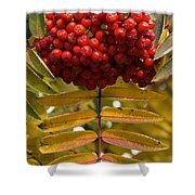 Buffalo Berries Shower Curtain