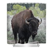 Buffalo Bird Shower Curtain