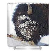 Buffalo Eating   #9634 Shower Curtain