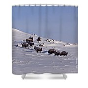 Buffalo Herd In Snow   #6075 Shower Curtain