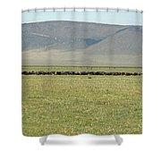 Buffalo Herd Shower Curtain