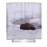 Buffalo In Snow   #6143 Shower Curtain