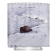 Buffalo In Snow   #6872 Shower Curtain