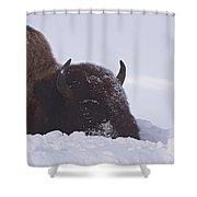 Buffalo In Snow   #6920 Shower Curtain