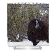 Buffalo In The Mountain   #4169 Shower Curtain