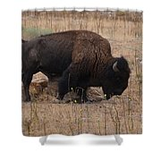 Buffalo Of Antelope Island Iv Shower Curtain