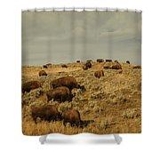 Buffalo On The Prairie Shower Curtain