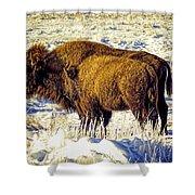 Buffalo Painting Shower Curtain