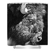 Buffalo Portrait Shower Curtain