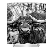Buffalo Stare In Black And White Shower Curtain