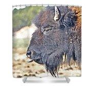 Buffalo Tongue Shower Curtain