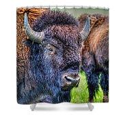 Buffalo Warrior Shower Curtain by Skye Ryan-Evans