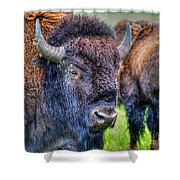 Buffalo Warrior Shower Curtain