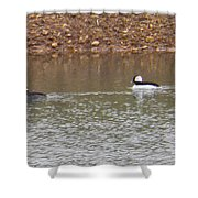 Buffleheads 3 Shower Curtain