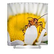 Bug On A Daisy Shower Curtain
