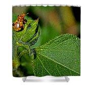 Bug On Leaf Shower Curtain