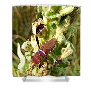 Bug On Stalk Of The Wooly Mullein Shower Curtain