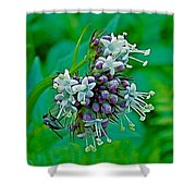 Bug On Wild Mint On Great Glacier Trail In Glacier National Park-british Columbia  Shower Curtain