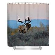 Bugle At Dusk Shower Curtain