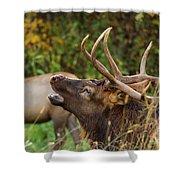 Bugling Bull Elk Shower Curtain