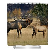 Bugling Elk With Calf Shower Curtain