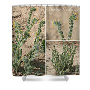Bugloss Fiddleneck Collage Shower Curtain