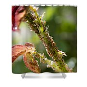 Bugs Are Hungry Shower Curtain