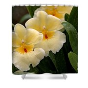 Build Me Up Buttercup Shower Curtain