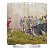 Bull Baiting Shower Curtain