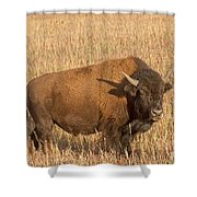 Bull Bison At The  Elk Ranch Grand Teton National Park Shower Curtain