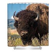 Bull Bison Shower Curtain