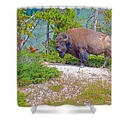 Bull Bison Near Mud Volcanoes In Yellowstone National Park-wyoming Shower Curtain