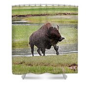Bull Bison Shaking In Yellowstone National Park Shower Curtain