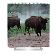 Bull Buffalo Guarding Herd With Green Grass Shower Curtain