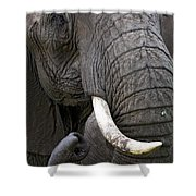 Bull Elephant Shower Curtain
