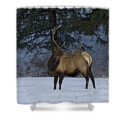 Bull Elk   #9923 Shower Curtain