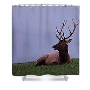 Bull Elk At Dusk Shower Curtain