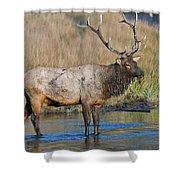 Bull Elk Crossing River Shower Curtain