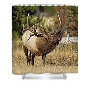Bull Elk II Shower Curtain