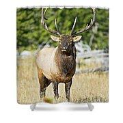 Bull Elk IIII Shower Curtain