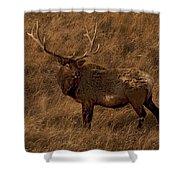 Bull Elk In Evening Light Shower Curtain