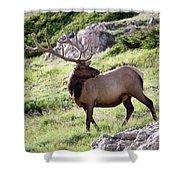 Bull Elk In Velvet Shower Curtain