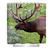Bull Elk In Yellowstone Shower Curtain