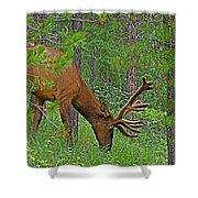 Bull Elk Near Maligne Canyon In Jasper Np-alberta Shower Curtain