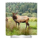 Bull Elk On Watch Shower Curtain