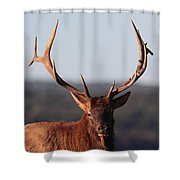 Bull Elk Portrait Shower Curtain