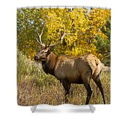 Bull Elk With Autumn Colors Shower Curtain