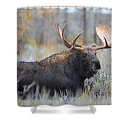 Bull Grunt Shower Curtain