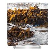 Bull Kelp Durvillaea Antarctica Blades In Surf Shower Curtain